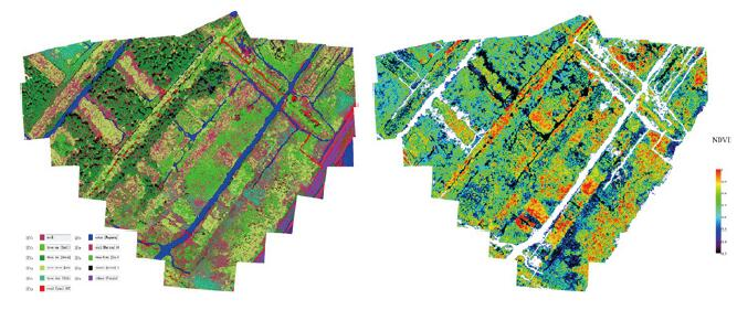 drone hyperspectral camera sensors   Classification of Mangrove Tree Species and NDVI Growth Map