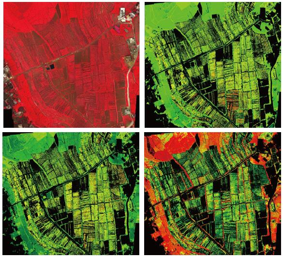 drone hyperspectral camera sensors Analysis of Tobacco Biochemical Index